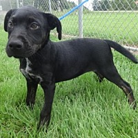 Adopt A Pet :: Haley - Olive Branch, MS