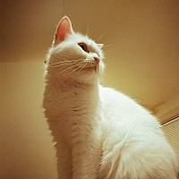 Adopt A Pet :: Dallas - COURTESY POSTING - Warrenton, MO