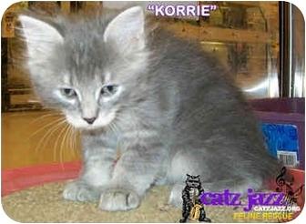 Domestic Mediumhair Kitten for adoption in Cedar Creek, Texas - Korrie