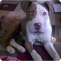 Adopt A Pet :: Copper - Claypool, IN