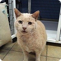 Adopt A Pet :: Tawnee - Colmar, PA