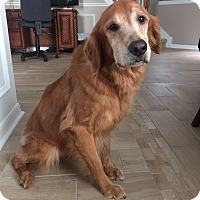 Adopt A Pet :: Star - Murdock, FL