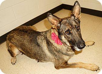 German Shepherd Dog Mix Dog for adoption in Lexington, North Carolina - Emerald