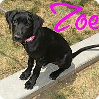 Adopt A Pet :: Zoe - Scottsdale, AZ