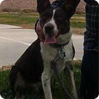 Adopt A Pet :: Axel - Phelan, CA