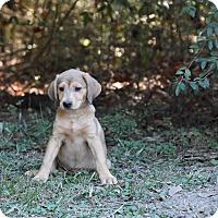 Adopt A Pet :: faife - South Dennis, MA