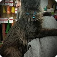 Adopt A Pet :: Bucky - Fairborn, OH