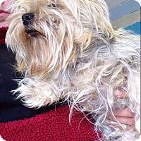 Adopt A Pet :: Amara - Hazard, KY
