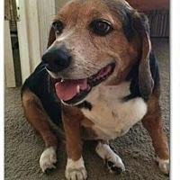 Adopt A Pet :: Reggie - Tampa, FL