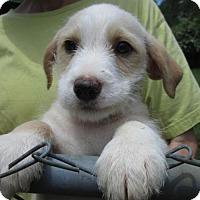 Adopt A Pet :: EINSTEIN - Lincolndale, NY