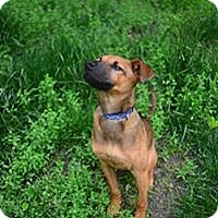 Adopt A Pet :: Bentley - Beacon, NY