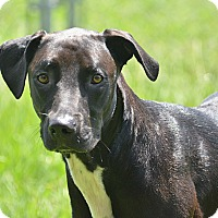 Adopt A Pet :: 10311490 ONYX - Brooksville, FL