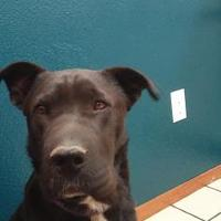 Adopt A Pet :: Bella - Las Cruces, NM