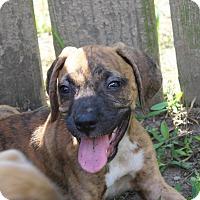 Adopt A Pet :: Justin-Adoption Pending - Marion, AR