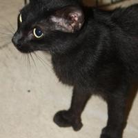Adopt A Pet :: Ali - Russellville, KY