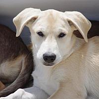 Adopt A Pet :: Willow - Mechanicsburg, PA