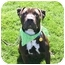 Photo 1 - Shar Pei/American Pit Bull Terrier Mix Dog for adoption in Auburn, California - Bubba