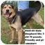 Photo 1 - Shepherd (Unknown Type) Mix Dog for adoption in Zanesville, Ohio - # 845-09 ADOPTED!