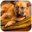 Photo 1 - Australian Shepherd/German Shepherd Dog Mix Dog for adoption in Portland, Oregon - Brandy