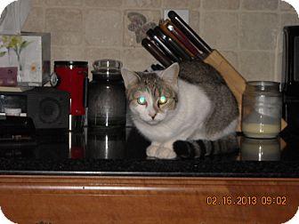 Domestic Shorthair Cat for adoption in Riverside, Rhode Island - Winnie