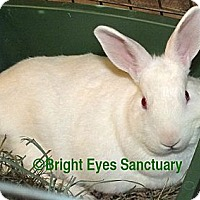 Adopt A Pet :: Reggie - Rockville, MD