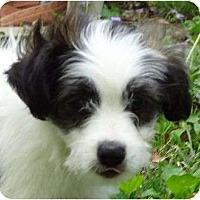 Adopt A Pet :: ID 543 - Plainfield, CT