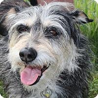 Adopt A Pet :: Minnie - Kempner, TX