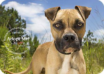 Boxer Mix Dog for adoption in Union Springs, Alabama - Leroy