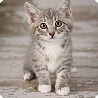 Adopt A Pet :: Apple - Plymouth, MN