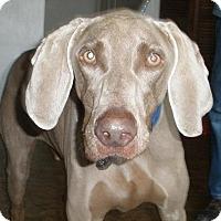 Adopt A Pet :: Buster - Sun Valley, CA