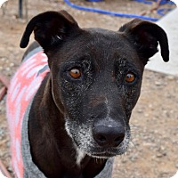 Adopt A Pet :: Hooligan - Tucson, AZ