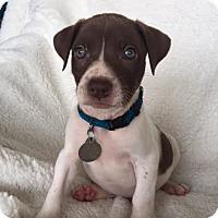 Adopt A Pet :: Silenus - PORTLAND, ME