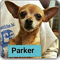 Adopt A Pet :: Parker - Staley, NC