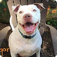 Adopt A Pet :: *SUGAR - Sacramento, CA