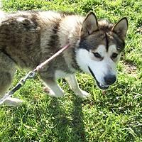 Adopt A Pet :: Lance - Augusta County, VA