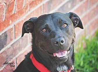 Labrador Retriever/Rottweiler Mix Dog for adoption in Kingwood, Texas - Tessa