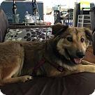 Adopt A Pet :: Diva