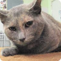 Adopt A Pet :: Mira - Reeds Spring, MO