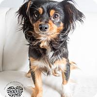Adopt A Pet :: Forum - Inglewood, CA