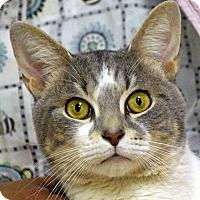 Adopt A Pet :: Pixel - Norwalk, CT