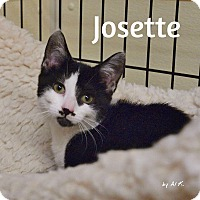 Adopt A Pet :: Josette - Ocean City, NJ