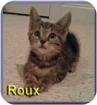Domestic Shorthair Kitten for adoption in Aldie, Virginia - Roux
