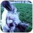Photo 4 - Shih Tzu Dog for adoption in Meridian, Idaho - Robert