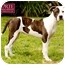Photo 3 - American Staffordshire Terrier/Pointer Mix Dog for adoption in Marina del Rey, California - Elsie