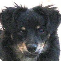 Adopt A Pet :: Sideways - Oakley, CA