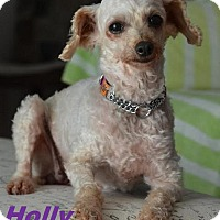 Adopt A Pet :: Holly - Adopted Aug 2015 - Huntsville, ON