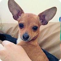 Adopt A Pet :: Dottie - Ogden, UT