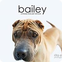 Adopt A Pet :: Bailey - pending - Apple Valley, CA