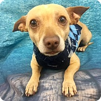 Adopt A Pet :: Gillis - Lake Elsinore, CA