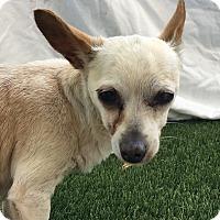Adopt A Pet :: Fern - Chula Vista, CA